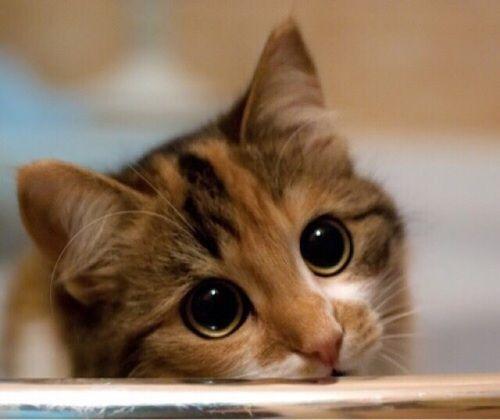 猫とPCケース 48台目 [無断転載禁止]©2ch.netYouTube動画>17本 ->画像>882枚