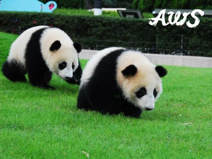 かわいいパンダやイルカに会える!