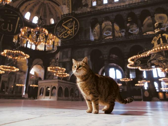 猫とモスク。