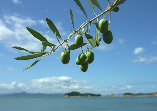 瀬戸内海の絶景の宝庫!小豆島を楽しむおすすめ観光スポット10選 1枚目の画像