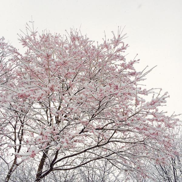 季節外れの雪