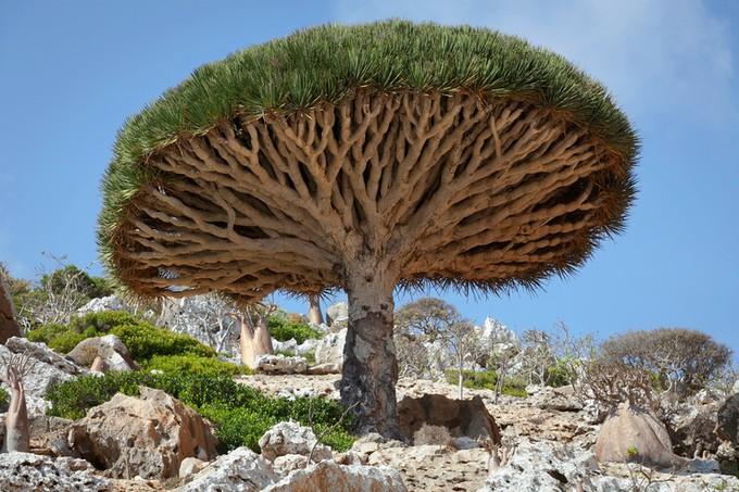 この~木なんの木気になる木 ...