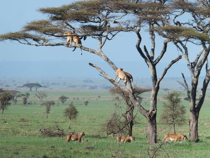 タンザニアの世界遺産おすすめラ...